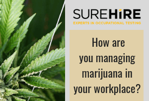 Managing Marijuana in Your Workplace