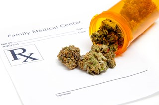 What are an employee's rights when it comes to using medical marijuana for pain?
