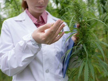 What happens to drug testing if marijuana becomes legal?