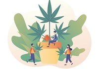 Cannabis in the Workplace: What To Consider About Off-Duty Marijuana Consumption